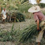 Agricultural Waste Problem